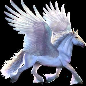 Draft Pegasus Drum Horse Black Tobiano