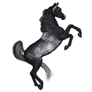 Riding Horse Appaloosa Black