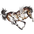 Riding Horse Appaloosa Chestnut Leopard
