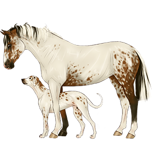 Riding Horse Thoroughbred Cremello
