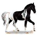 Riding Horse Vanner Black Tobiano