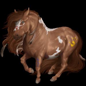 Pony Shetland Bay