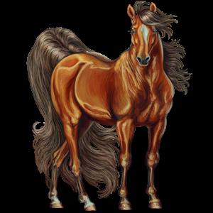 Верховая лошадь Ирландская охотничья Красно-гнедая
