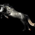 Riding Horse Dark Bay