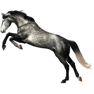 Riding Horse Thoroughbred Light Gray