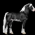 Cavalo de passeio Mangalarga Marchador Rosilho castanho