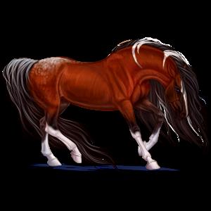 Riding Horse Paint Horse Liver chestnut Tovero