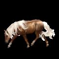 Cavalo de passeio Paint Horse Tobiano castanho