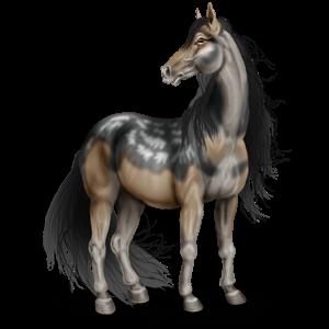 Pony Quarter Pony Chestnut