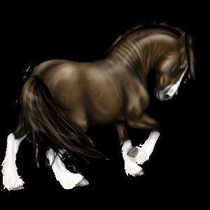 Pony Welsh Dark Bay
