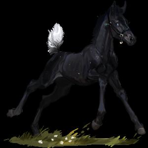 Riding Horse Thoroughbred Flaxen Chestnut