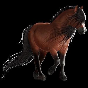 Pony Quarter Pony Strawberry roan