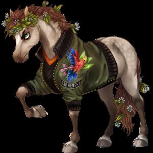 Koń wierzchowy Cob Irlandzki Izabelowata