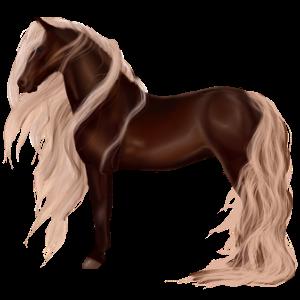 Pony Belgisches Reitpony Dunkelfuchs mit heller Mähne