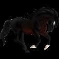 Koń wierzchowy Criollo Kara derka z plamkami