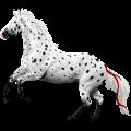 Ratsuhevonen Holsteininhevonen Papurikkotäpläinen kimo