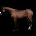 Ratsuyksisarvinen Mustangi Sysirautias