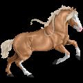 حصان ركوب حصان جيبسي فانر كميت أبقع