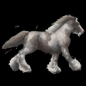 Draft horse Shire Light Gray