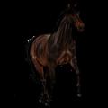 Верховая лошадь Хановериян, Ганноверская Красно-гнедая