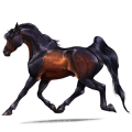 Riding Horse French Trotter Black