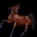 حصان ركوب حصان الربع ميل (كوارتر) كستنائي كتاني