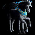 Riding Horse Marwari Light Gray