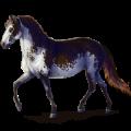 Pony Shetland Cherry bay