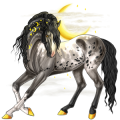 Riding Horse Appaloosa Chestnut Snowflake