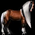 Jahalni konj Argentinski criollo Črna z belim pikčastim zadkom