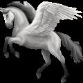 Riding pegasus Mustang Few Spots