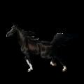 Riding Horse Selle Français Palomino