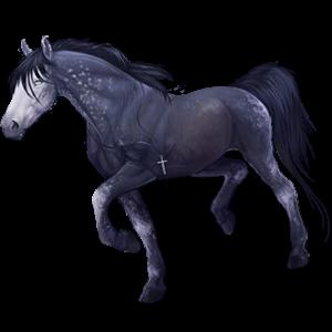 Pegaz wierzchowy Koń czystej krwi arabskiej Siwa Jabłkowita