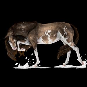 Rijpaard KWPN Roodbruin