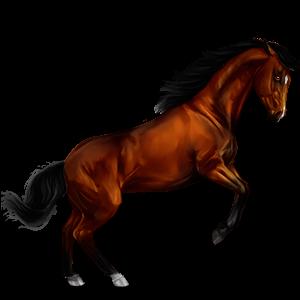 Riding Horse Hanoverian Cherry bay