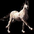 Riding Horse Selle Français Roan