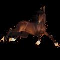 Cheval de selle Quarter Horse Gris Souris