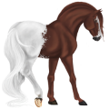 Cheval de selle Paint Horse Pie Tobiano Bai Brûlé