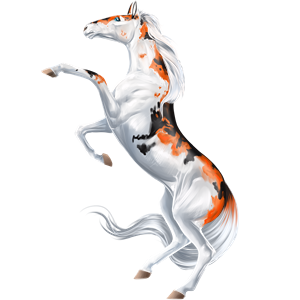 Koń wierzchowy Nokota Kara
