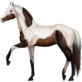 Riding Horse Marwari Flaxen Chestnut