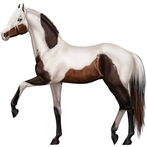 Riding Horse Paint Horse Cherry Bay Overo