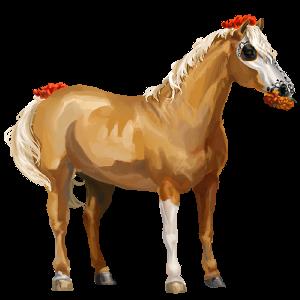 Pony Quarter Pony Palomino