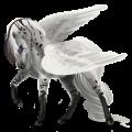 Pegasus pony Belgian Riding Pony Dark Bay