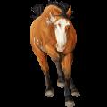 Rijpaard Kastanje
