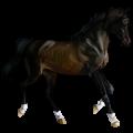 Koń wierzchowy Koń luzytański Jasnosiwa