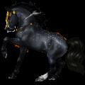 Riding Horse Friesian Black
