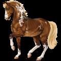 Riding Horse Nokota Chestnut