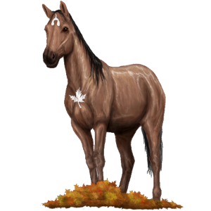 Riding Horse Trakehner Roan