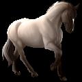 Koń wierzchowy Koń luzytański Kasztanowata