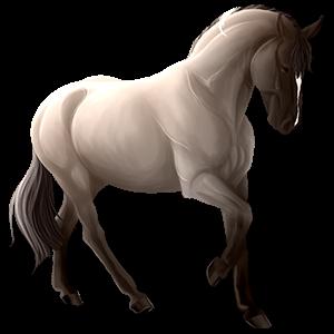 Riding Horse Tennessee Walker Dun